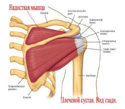 Плечелопаточный периартрит - лечение в Нижнем Новгороде ...